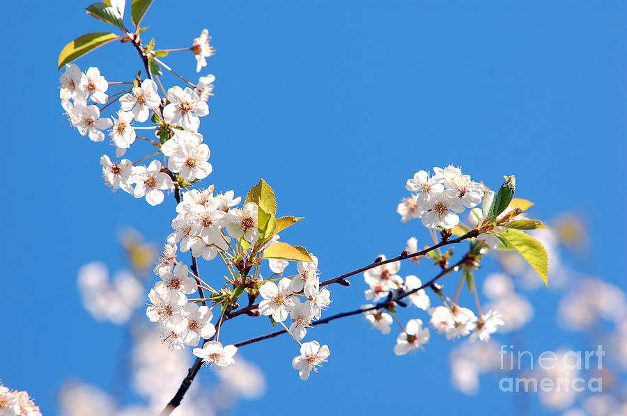 Background Photograph - Spring Tree by Michal Bednarek