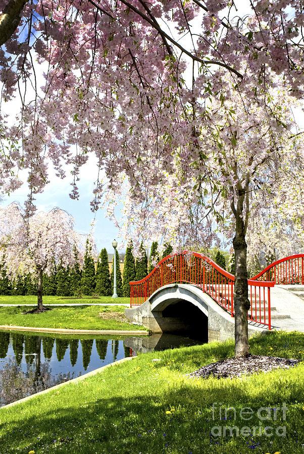 Spring Walk Around Lake Photograph
