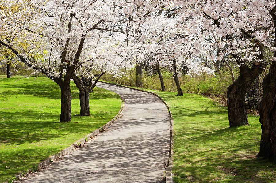 Spring Walk In High Park Photograph by Debralee Wiseberg