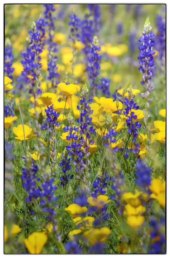 Mexican Poppies Photograph - Spring Wildflower Bouquet  by Saija  Lehtonen