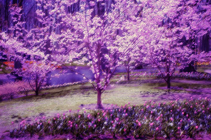 Spring Photograph - Spring Wonderland Pastel. Garden Keukenhof. Netherlands by Jenny Rainbow