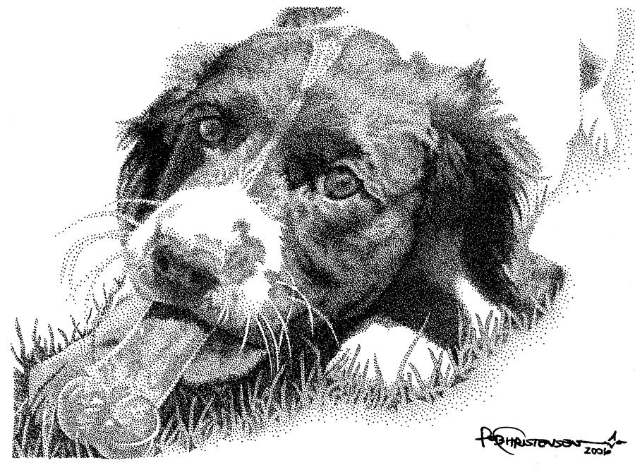Dog Drawing - Springer Puppy by Rob Christensen