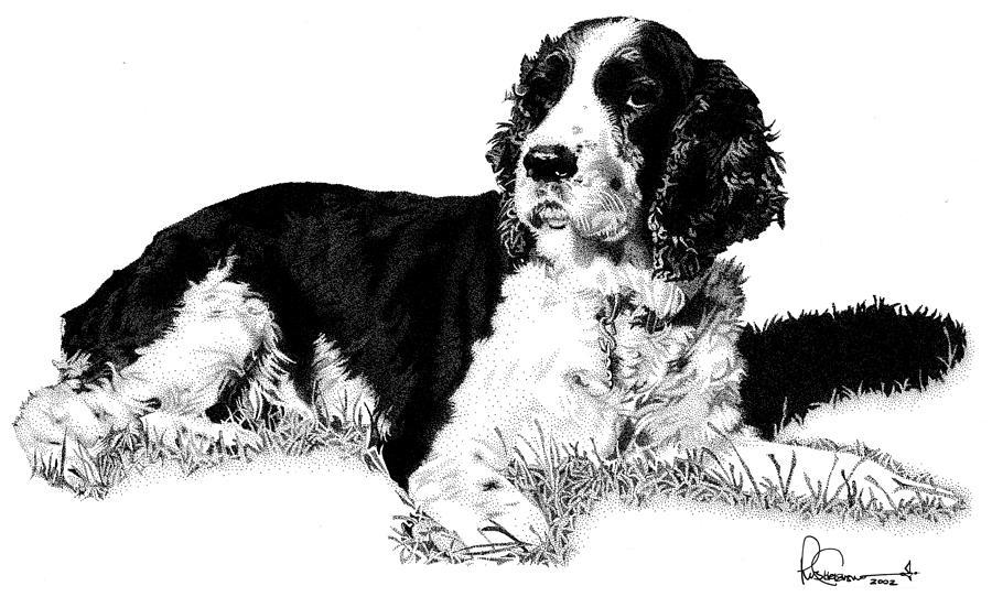 Dog Drawing - Springer by Rob Christensen