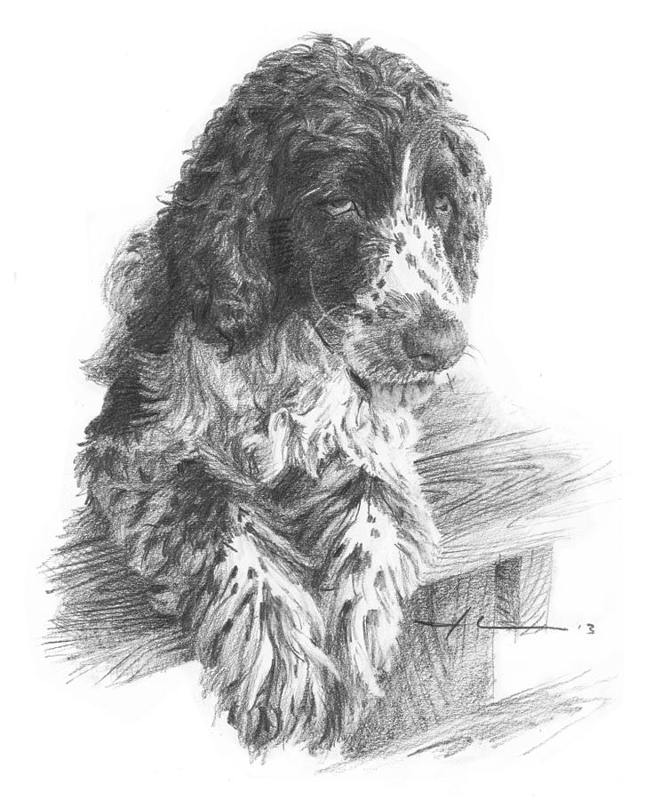 Springer Spaniel Dog Pencil Portrait Drawing by Mike Theuer