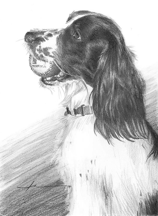 Springer Spaniel Playing Fetch Pencil Portrait Drawing by Mike Theuer