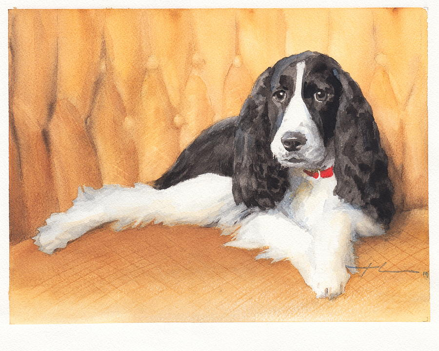 Springer Spaniel Watercolor Portrait Drawing by Mike Theuer