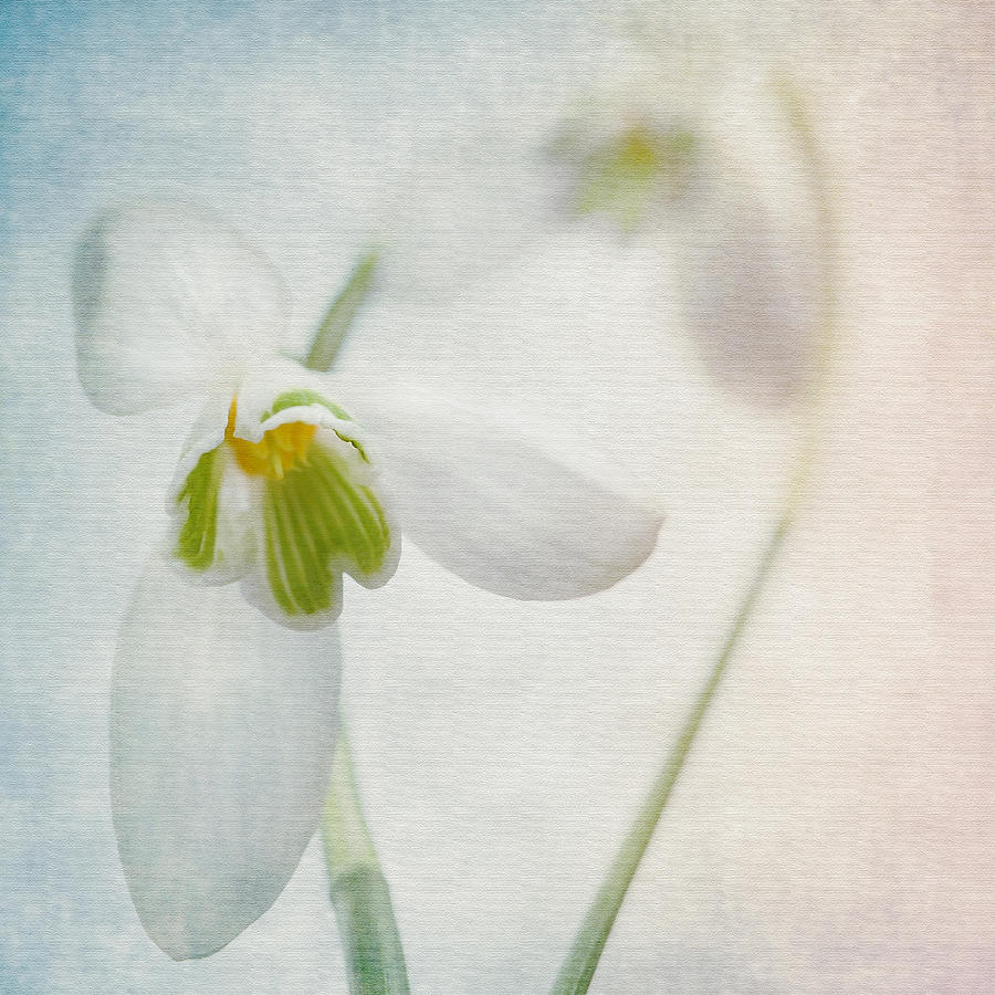 Floral Photograph - Springflower by Annie Snel