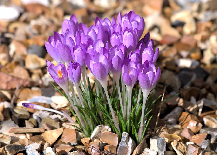 Spring Flowers Photograph - Springflowers by Gordon Auld