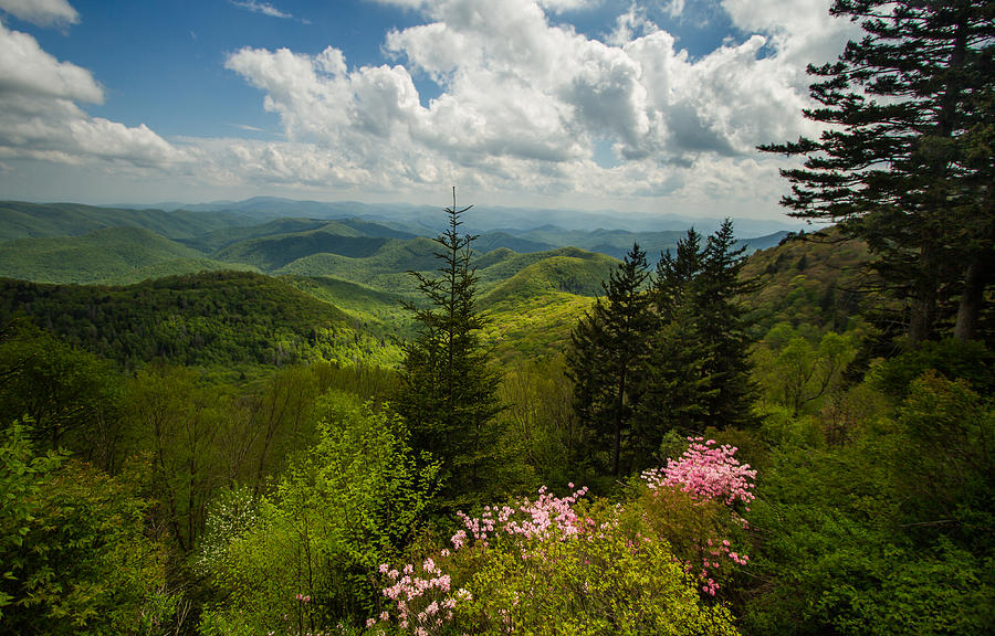 Spring Photograph - Springs Green Blanket by Doug McPherson