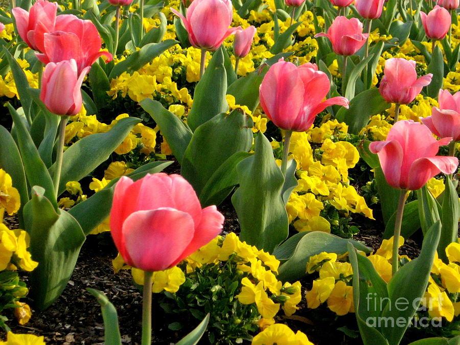 Springtime Digital Art - Springtime In South by Matthew Seufer