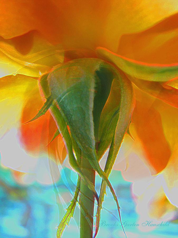 Roses Photograph - Spring In Summer by Brooks Garten Hauschild