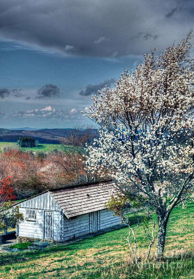 North Carolina Photograph - Springtime In The Blue Ridge Mountains I by Dan Carmichael
