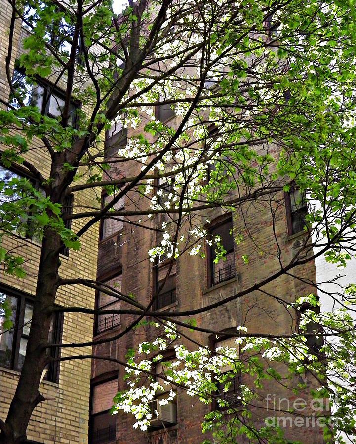 Springtime In Washington Heights 2 Photograph By Sarah Loft