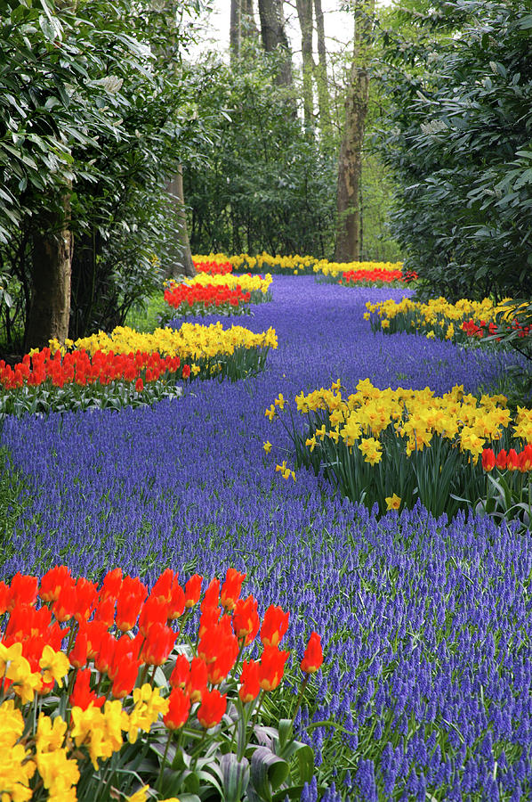Springtime Keukenhof Gardens With Photograph by Manfred Gottschalk