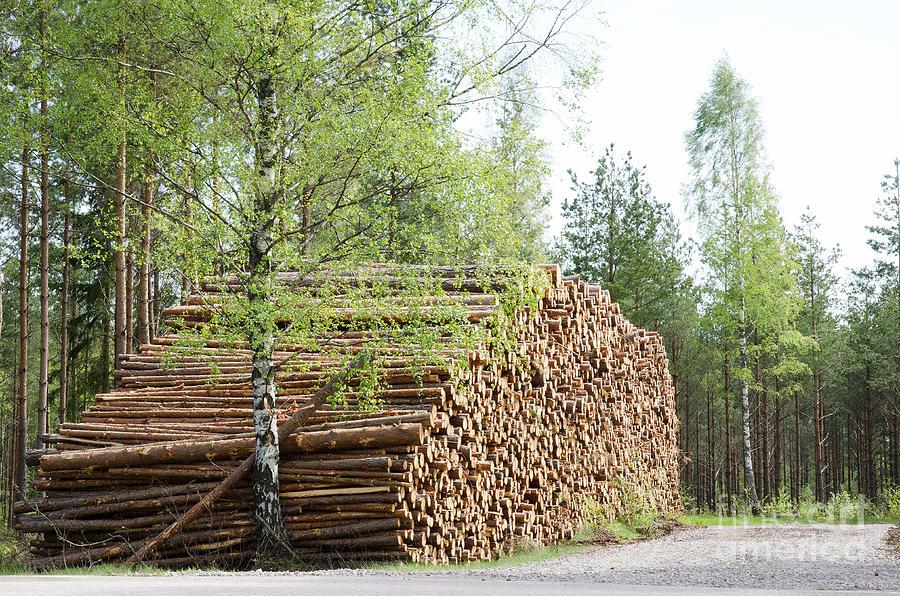 Sweden Photograph - Springtime Logs by Kennerth and Birgitta Kullman