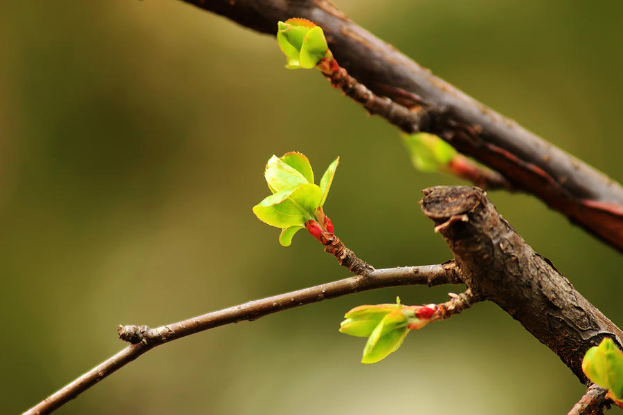 Spring Photograph - Sprout  by Phoresto Kim