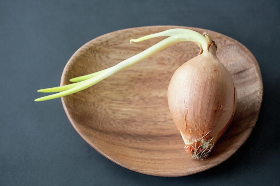 Sprouting Onion On A Wooden Plate Photograph by Elin Enger