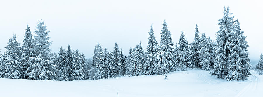 Spruce Tree Forest Covered by Snow in Winter Landscape Photograph by VeryBigAlex