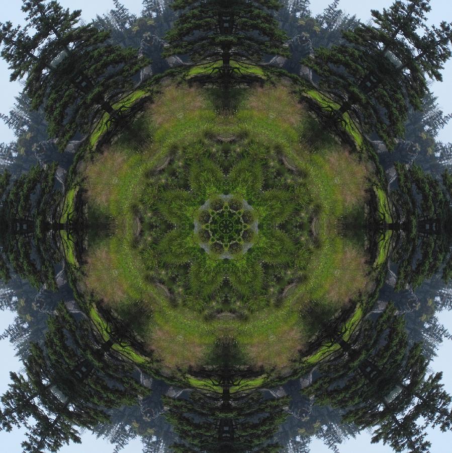 Spruce Tree Twins by Trina Stephenson