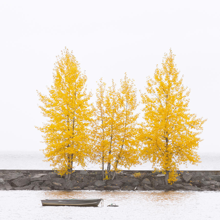 Autumn Photograph - Square Diptych Tree 12-7693 Set 1 Of 2 by U Schade
