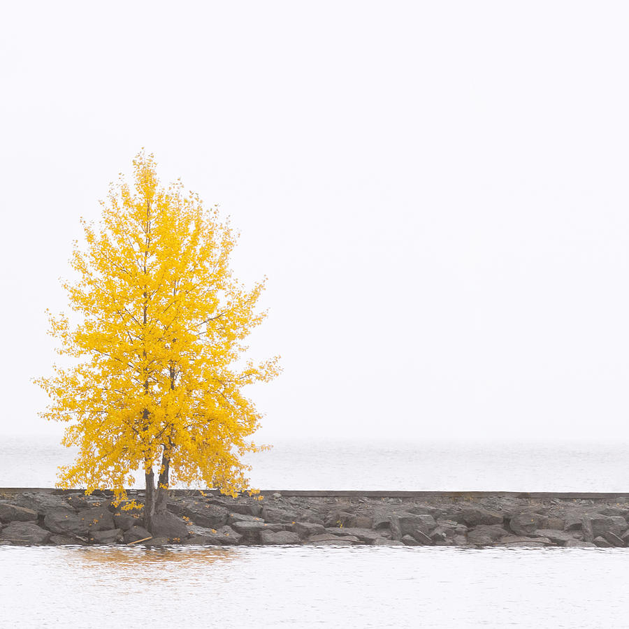 Autumn Photograph - Square Diptych Tree 12-7693 Set 2 Of 2 by U Schade