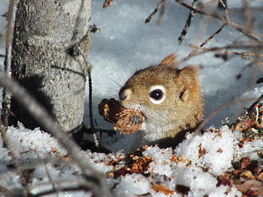 New England Photograph - Squirrel 2 by Gene Cyr