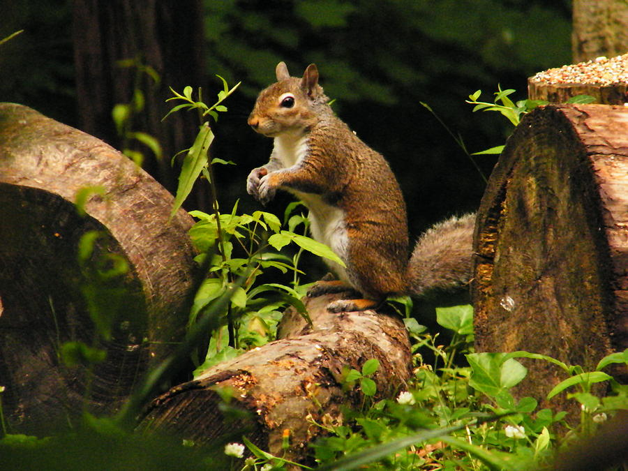 Squirrel Photograph - Squirrel by Brittany Gandee