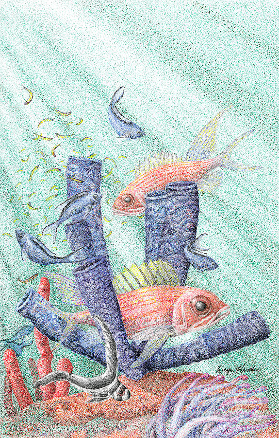 Reef Drawing - Squirrel Fish Reef by Wayne Hardee