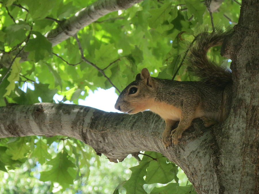 Squirrel Focus by Cindy Clements