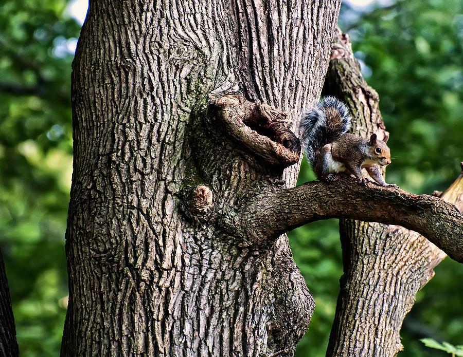 Squirrel Digital Art - Squirrel Guarding Watering Knot by Chris Flees