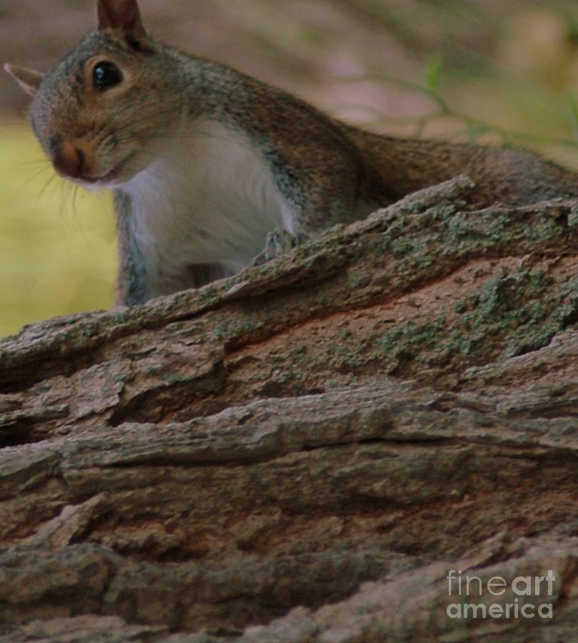 Squirrel Photograph - Squirrel by Kathleen Struckle