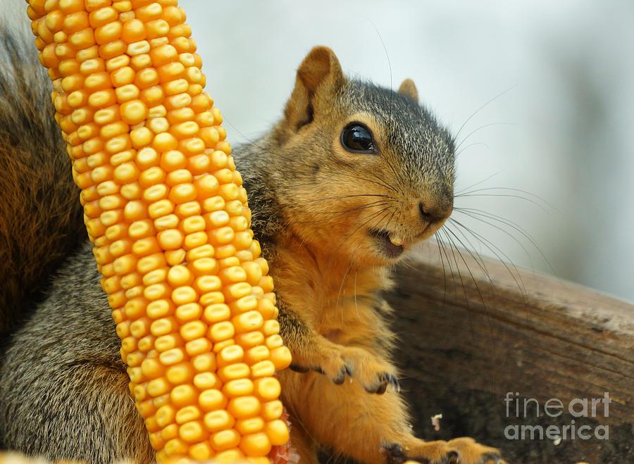 Squirrel Photograph - Squirrel by Lori Tordsen