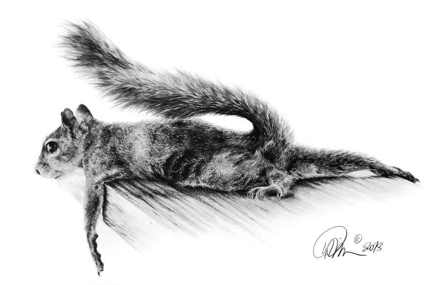 Squirrel Drawing by Mario Pichler