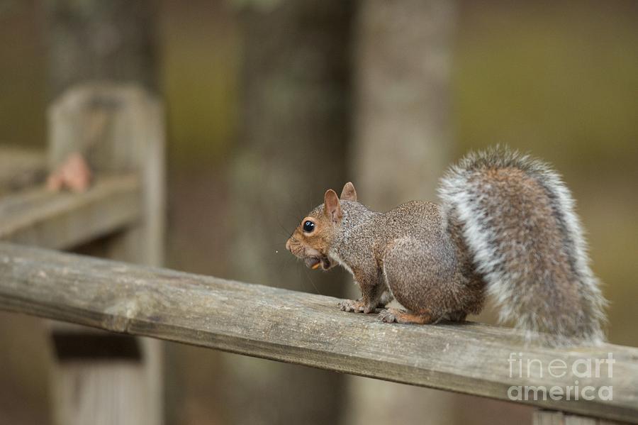 Squirrel by Miguel Celis
