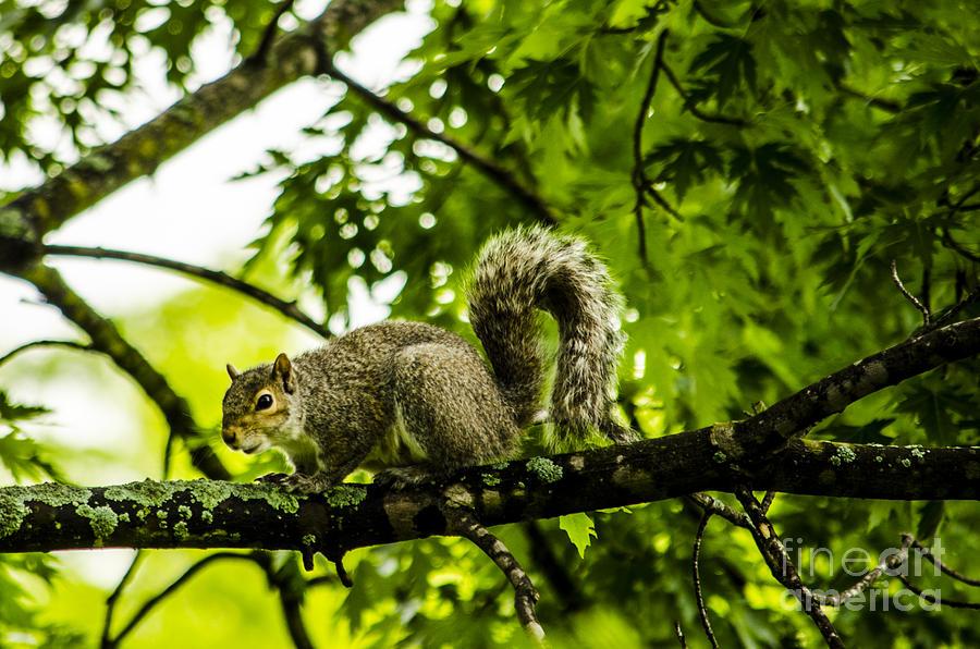Squirrel Photograph - Squirrel On The Hunt by Deborah Smolinske