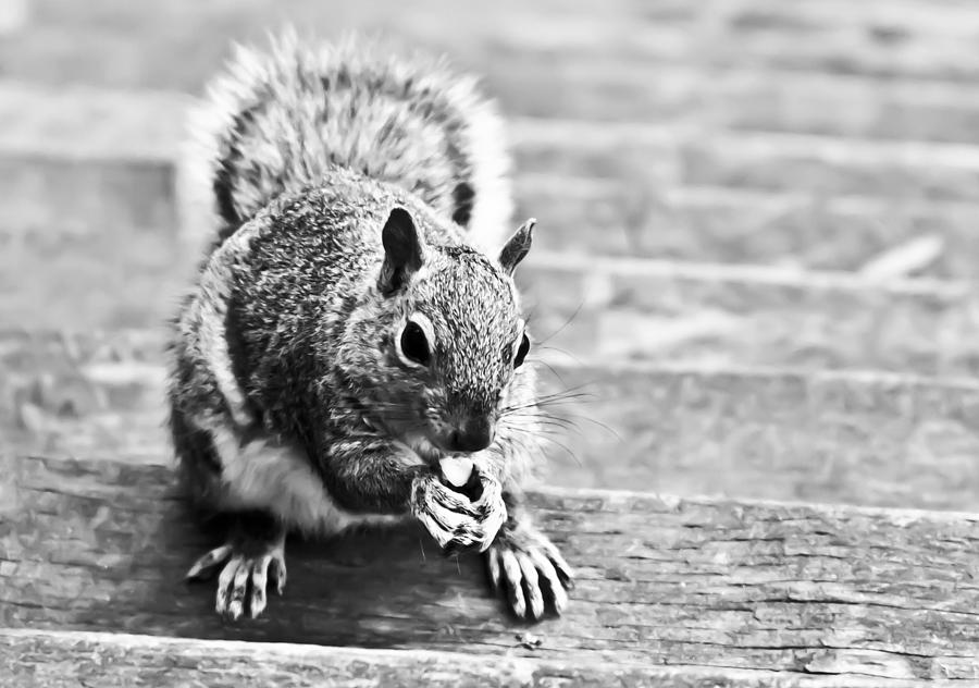 Animal Photograph - Squirrel by Paulina Szajek