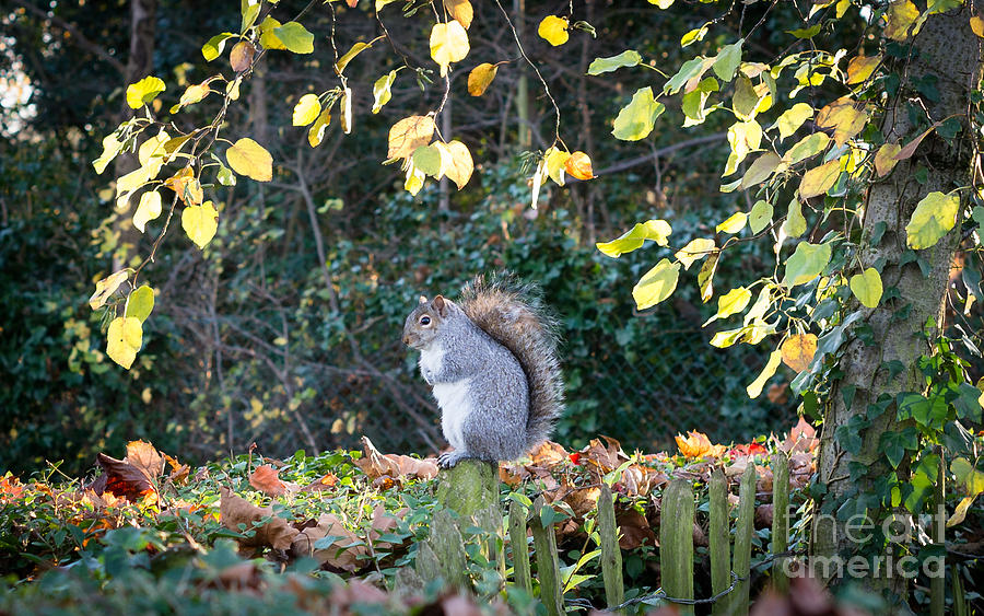 Squirrel Photograph - Squirrel Perched by Matt Malloy