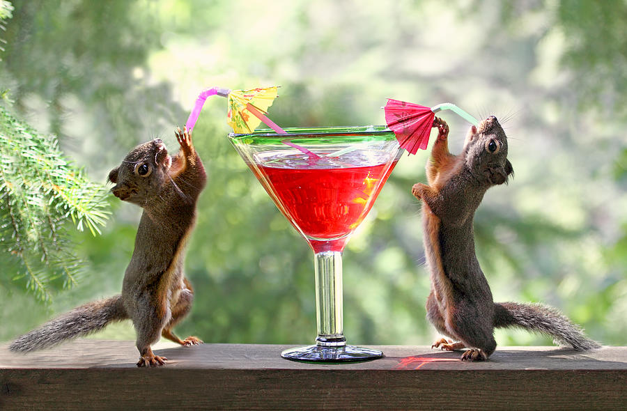 Squirrels Photograph - Squirrels At Cocktail Hour by Peggy Collins