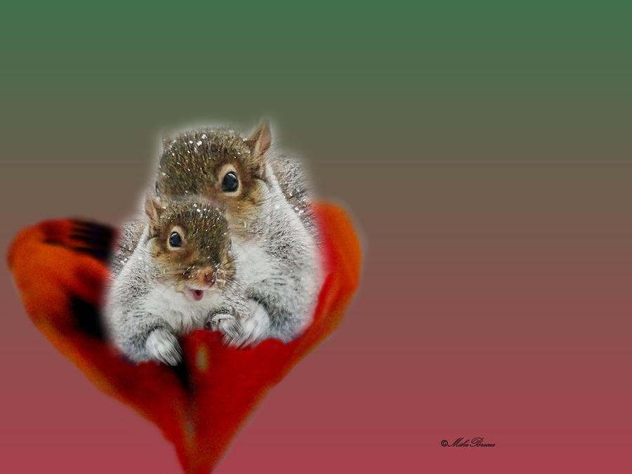 Squirrels Valentine Photograph