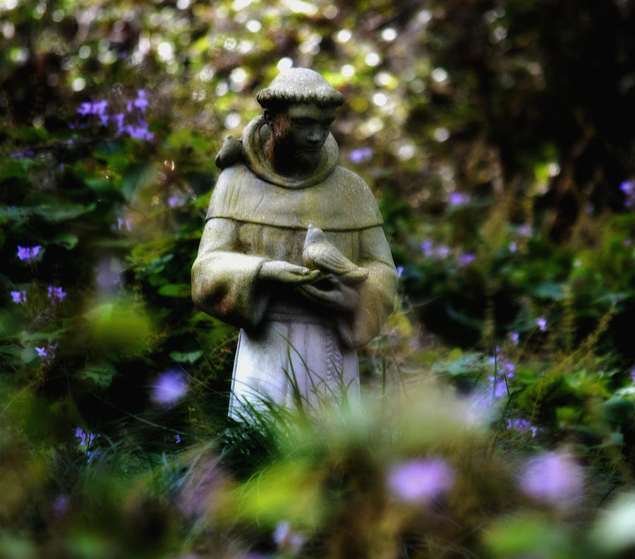 Garden Sculpture Photograph - St. Francis Of Assisi by Tara Miller