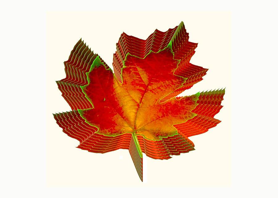 Leaf Photograph - Stacked Maple Leaf  by Susan Elizabeth Dalton