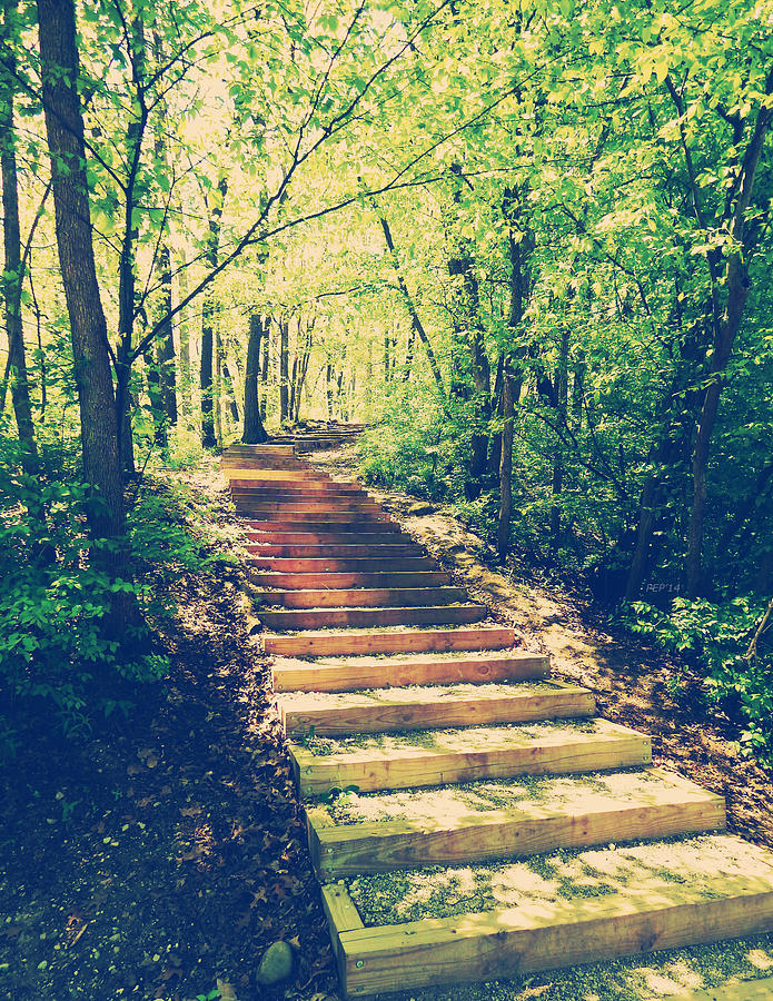 Woods Photograph - Stairway Into The Forest by Phil Perkins