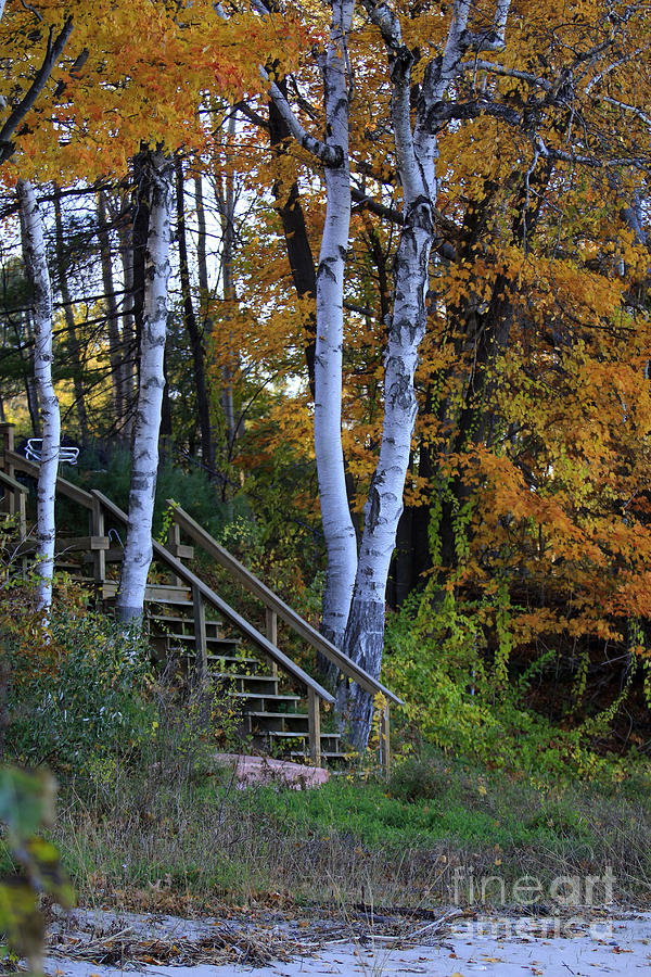 Fall Photograph - Stairway To Fall by Kathy DesJardins