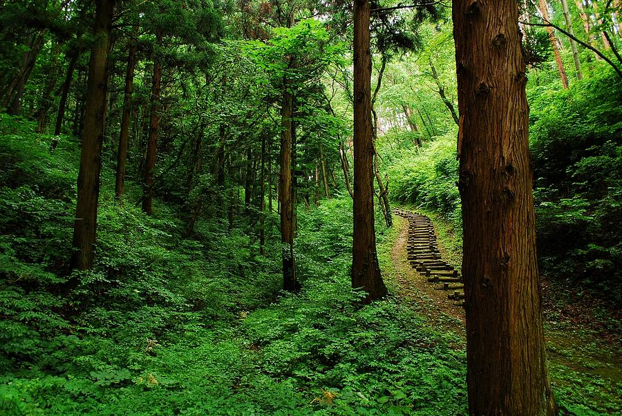 Forest Photograph - Stairway To Healing by Aaron Bedell