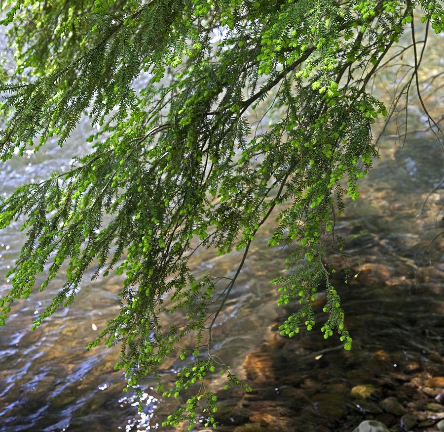 Creek Photograph - Stalking Trout by John Stephens