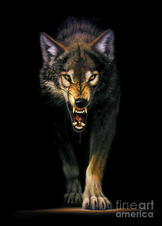 Animal Photograph - Stalking Wolf by MGL Studio - Chris Hiett