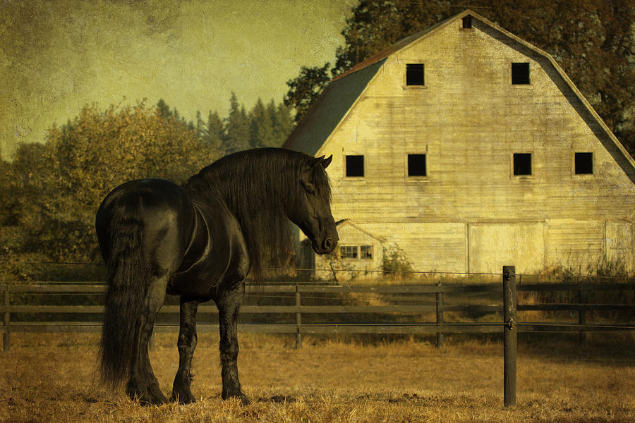 Stallion At Rest D1535 Photograph - Stallion At Rest D1535 by Wes and Dotty Weber