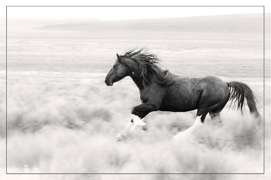 Stallion Blur D8785 Photograph - Stallion Blur D8785 by Wes and Dotty Weber