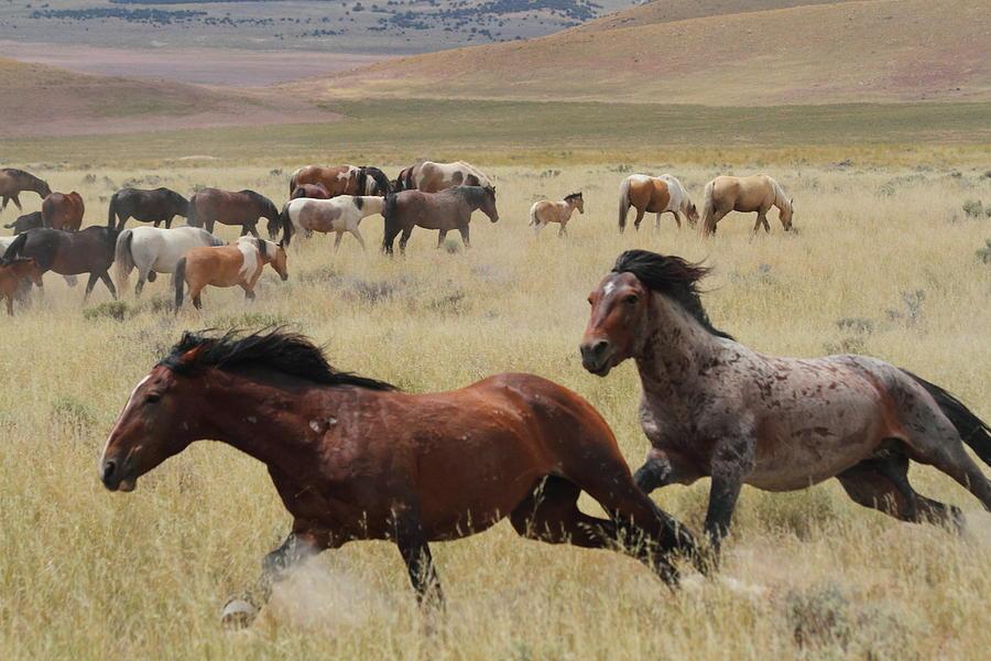 Horse Photograph - Stallion Chase by Gene Praag