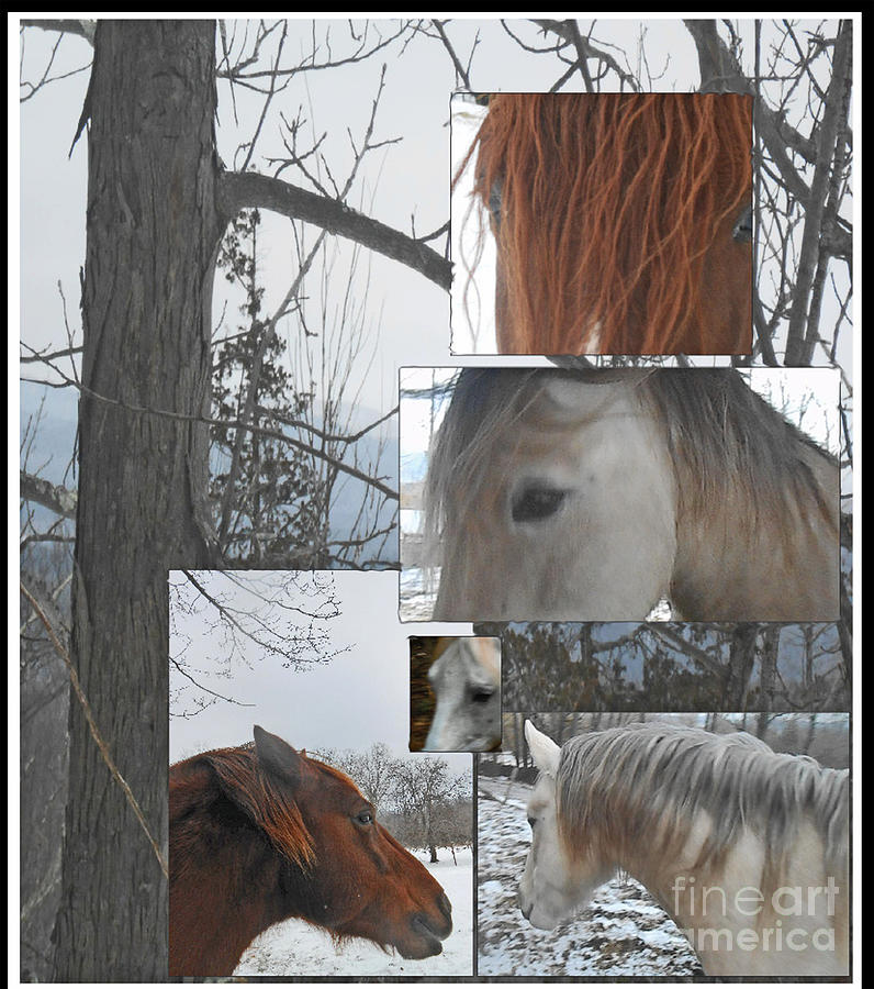 Scenic Photograph - Stallions Collage There Is A Connection by Patricia Keller